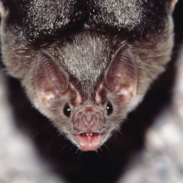 First Positive Case of Rabies in 2021 Found in a Bat